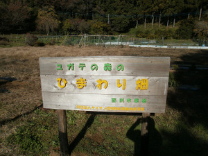 Sukariyama_20111123_217
