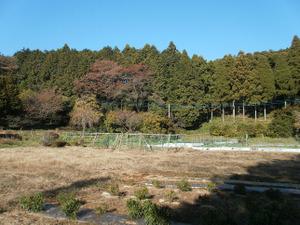 Sukariyama_20111123_218