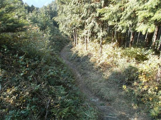 Sukariyama_20111123_236