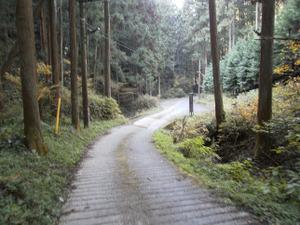 Sukariyama_20111123_241