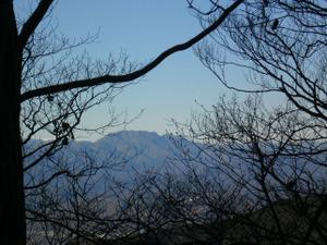 Hikisanzan_bateikeijyuso_20111224_9