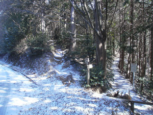 Ogamiyamakaoburi_20120218_215