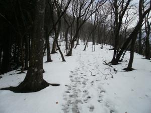 Futagoyama_yokoze_20120303_064