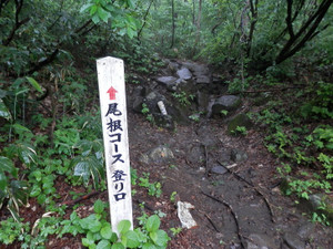 Makihatayama_20120623_056