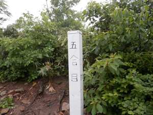 Makihatayama_20120623_083