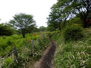 Akagiyama_20120630_388
