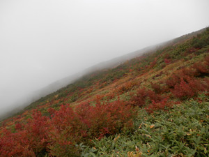 Shibutsusan_20121006_144