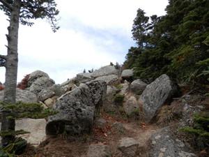 Kobushikarisaka_20121013_145