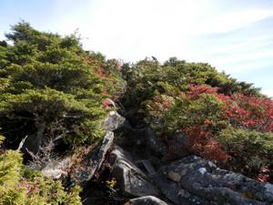 Kobushikarisaka_20121013_434