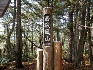 Kobushikarisaka_20121013_444
