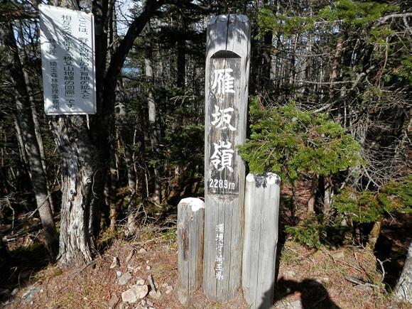 Kobushikarisaka_20121013_506