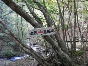 Kobushikarisaka_20121013_582