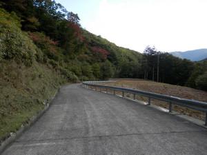 Kobushikarisaka_20121013_597
