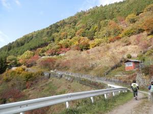 Takanosuyama_20121103_081