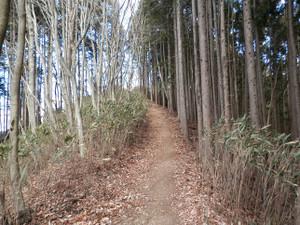 Okumusashi_bateikei_high20130103_58