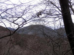 Okumusashi_bateikei_high20130103_95