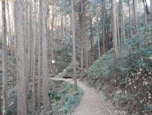 Hiwadakaoburi_20130126_011