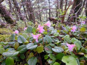 Kaikomagatake_20130706_148