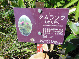Karamatsudake_20130826_106