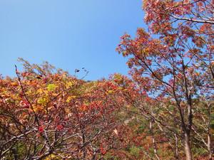 Adatarayama_20131014_330