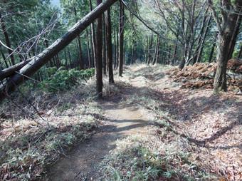 Okumusashibateikei_20140419_084